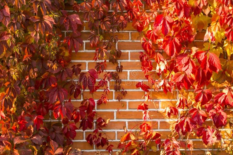 Jesieni trybowa ściana z cegieł, tapety zdjęcia royalty free