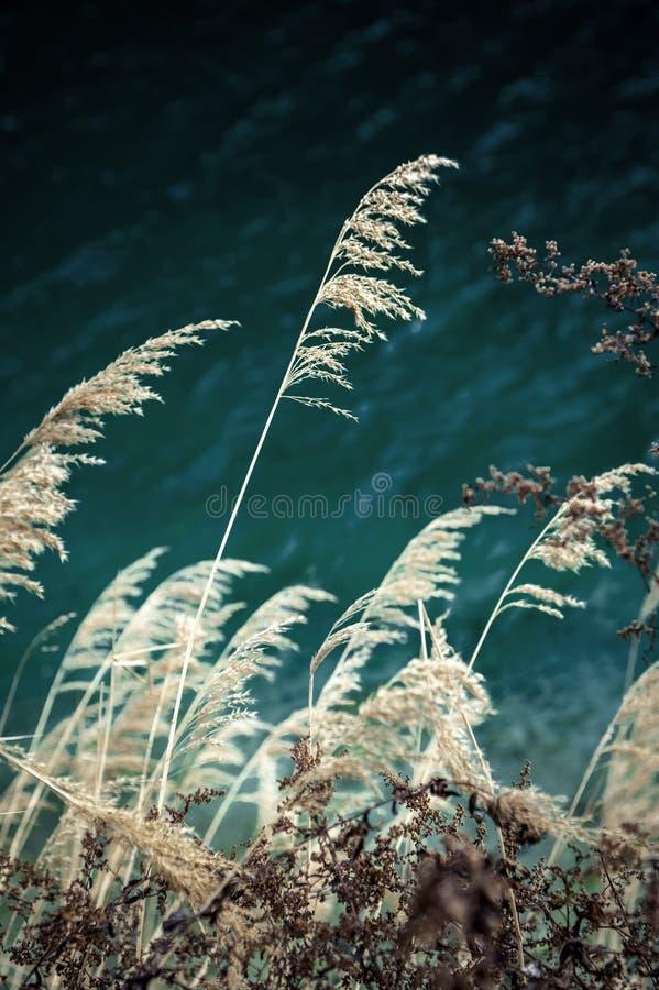 Jesieni trzcinowego brzeg jeziora ciep?y kontrast zdjęcia royalty free