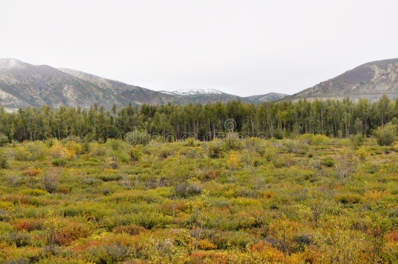 Jesieni tundra na tle góry w Yakutia. fotografia stock