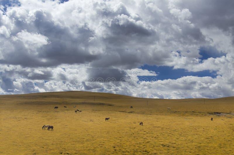Jesieni Tybet obłoczny plateau fotografia stock