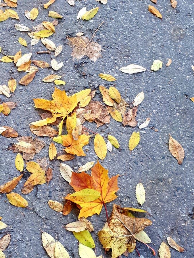 Jesieni ulica z kolorami obraz stock