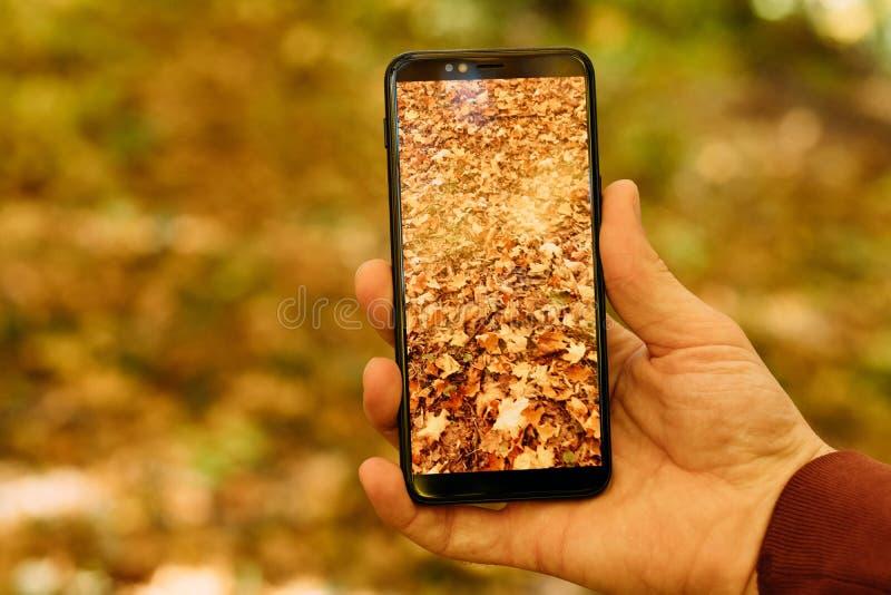 Jesieni ulistnienia smartphone liści złoty tło zdjęcia stock