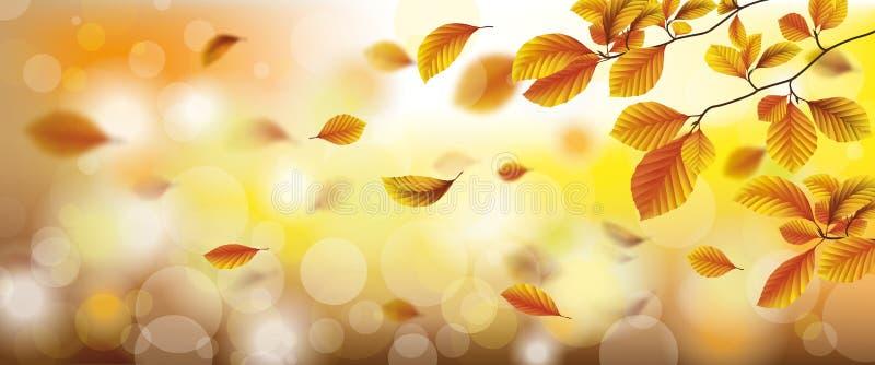 Jesieni ulistnienia spadku Bukowych świateł słonecznych Wiatrowy chodnikowiec ilustracja wektor