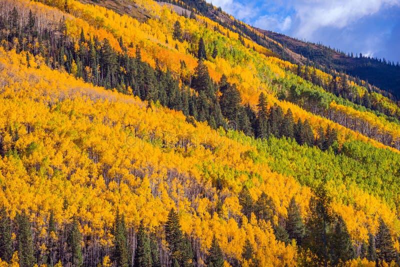 Jesieni ulistnienie Kolorado zdjęcia stock