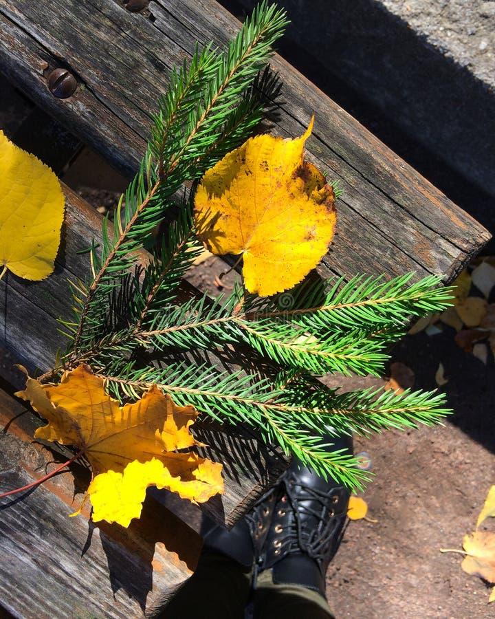 Jesieni wielobarwność kolory obraz stock