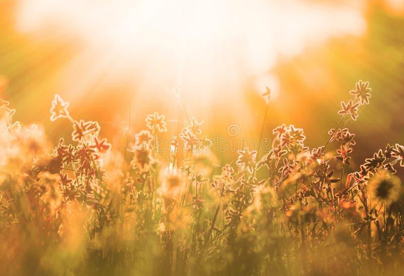 Jesieni wildflower i trawa obrazy royalty free