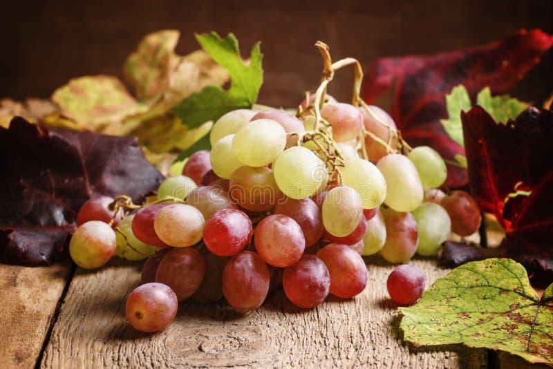 Jesieni winogrono, selekcyjnej ostrości jedzenia wciąż życie zdjęcia royalty free