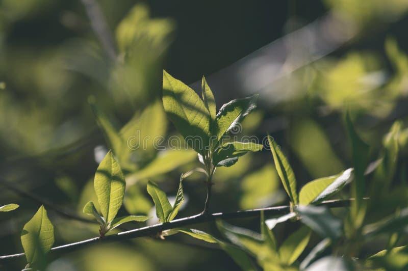 jesieni złoto barwiący opuszcza w jaskrawym świetle słonecznym - rocznika stary spojrzenie zdjęcie stock