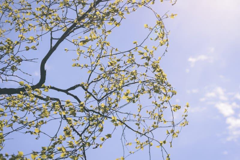 jesieni złoto barwiący opuszcza w jaskrawym świetle słonecznym - rocznika stary spojrzenie fotografia stock