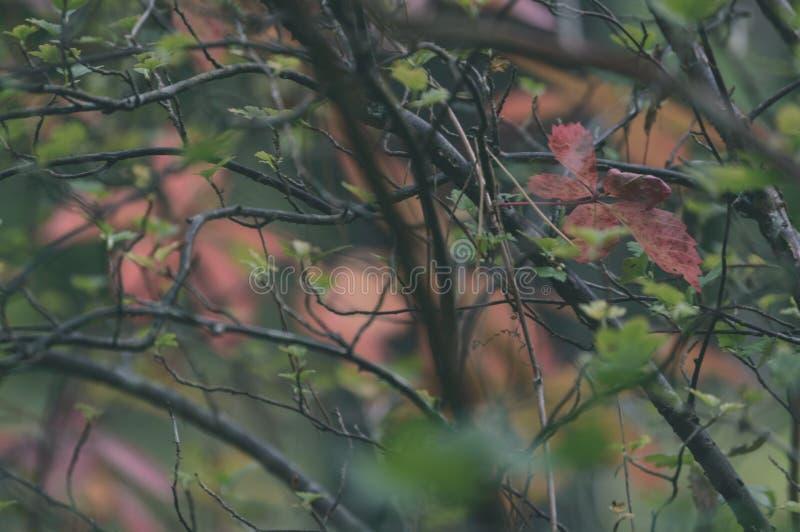 jesieni złoto barwiący opuszcza w jaskrawym świetle słonecznym - rocznika stary spojrzenie zdjęcia royalty free