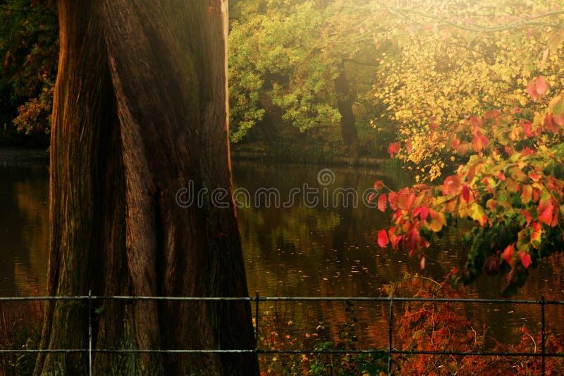 Jesieni złoty światło Hampstead London UK Anglia i coloursIn obraz royalty free