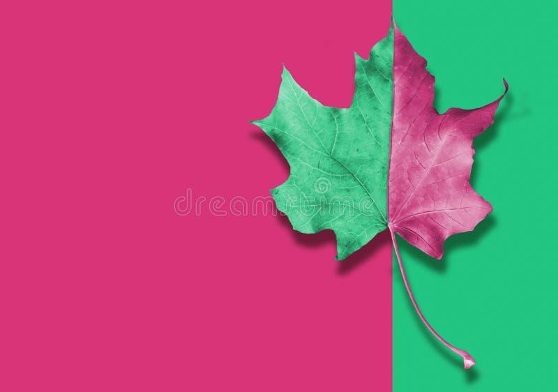 Jesieni zieleni i menchii liść na abstrakcjonistycznym tle zdjęcia royalty free