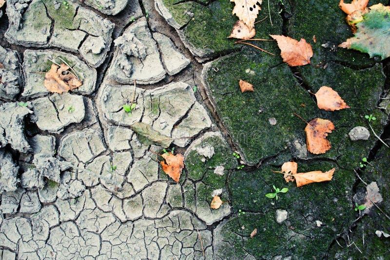 Jesieni ziemia zdjęcia stock
