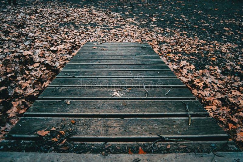 Jesienna ścieżka drewniane deski obrazy royalty free