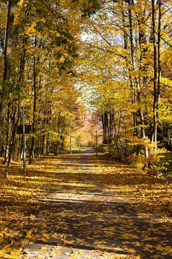 Jesienna ścieżka w lesie pionowa obraz royalty free