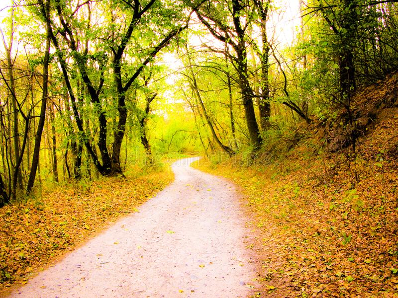 Jesienna lasowa droga fotografia royalty free