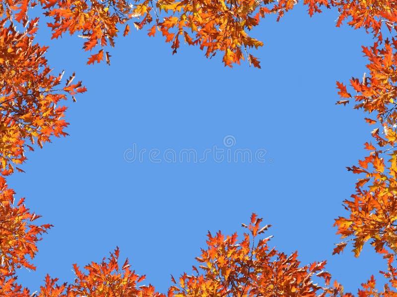 jesienna rama zdjęcie royalty free