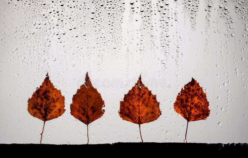 Jesienne liście do szkła deszczowego koncepcja sezonu jesiennego obrazy royalty free