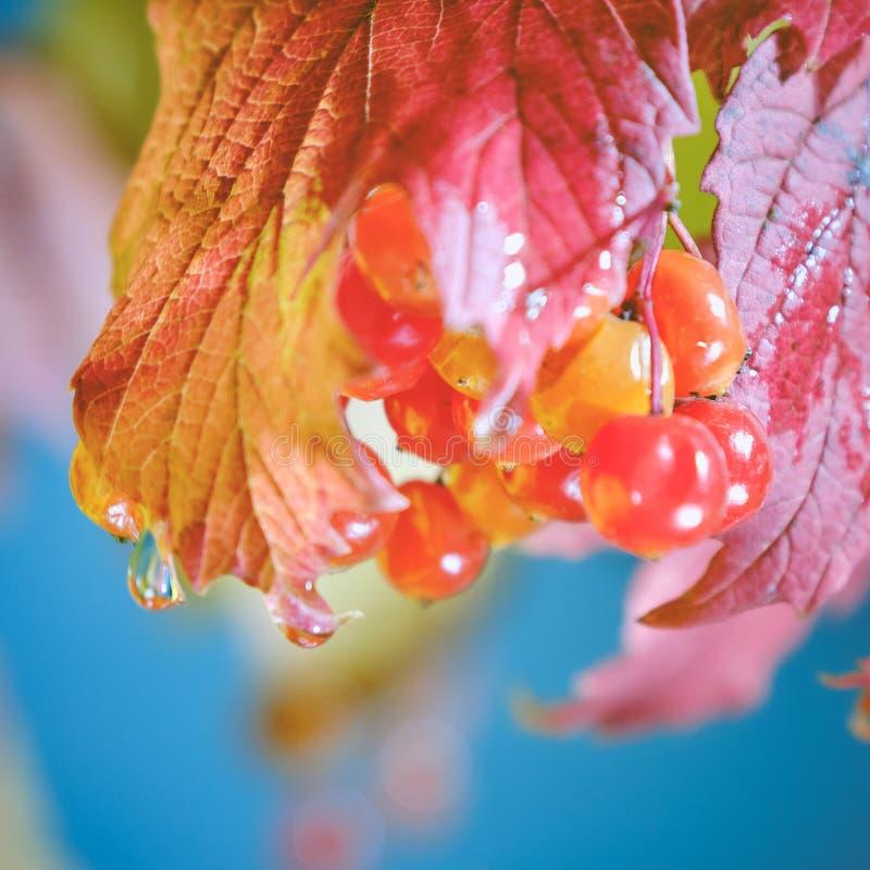 Jesienne liście i krople wody zdjęcia royalty free