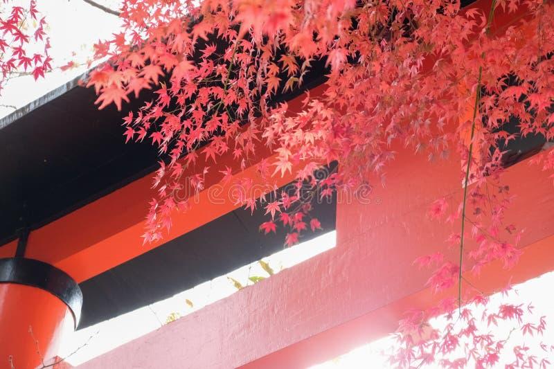 Jesienne liście Kioto ze świątynią fotografia royalty free