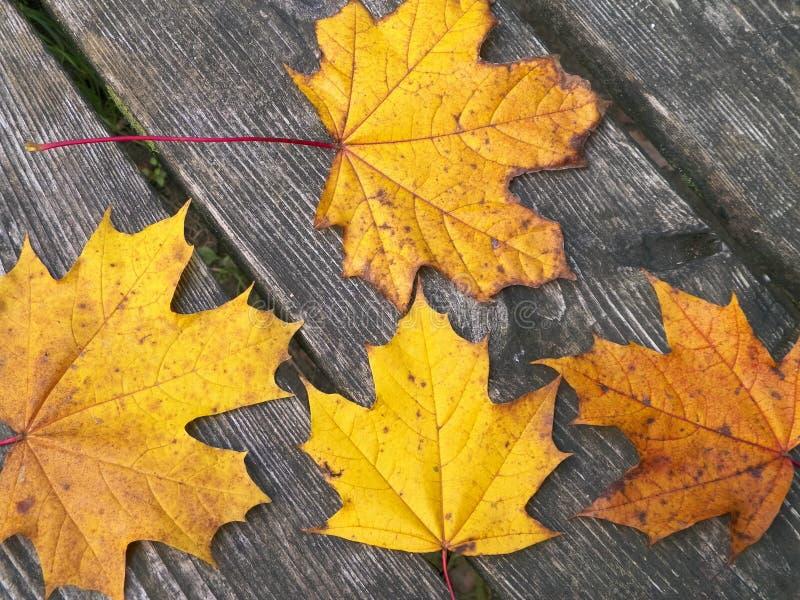 Jesienne liście na drewnie jako tło przyrodnicze obraz stock