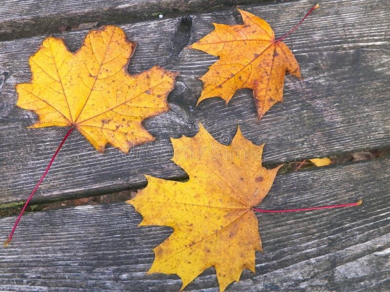 Jesienne liście na drewnie jako tło przyrodnicze fotografia royalty free
