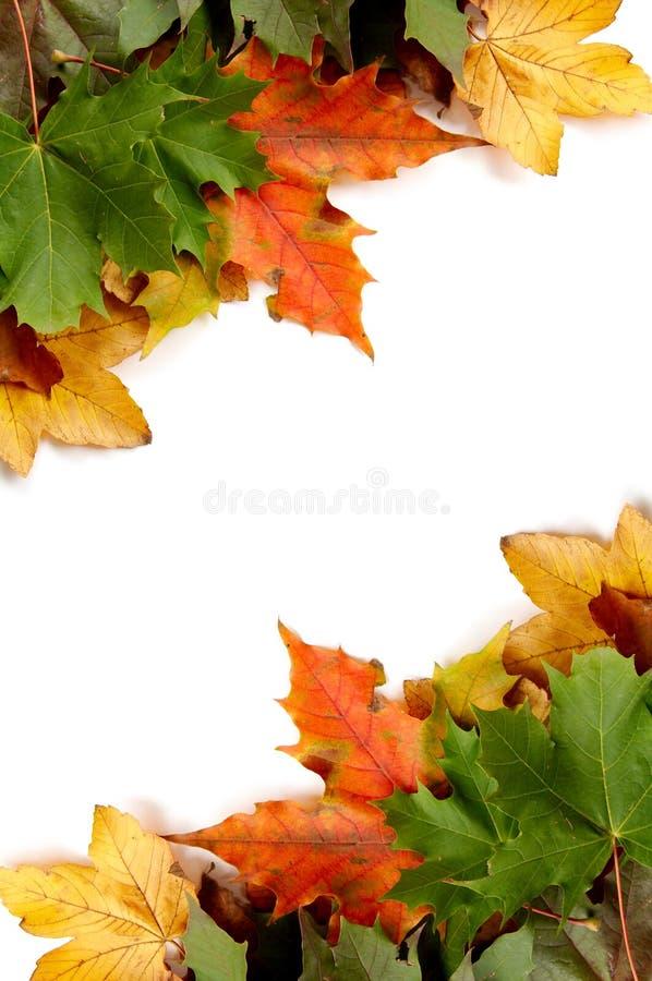 jesienni liście kolor zdjęcie royalty free