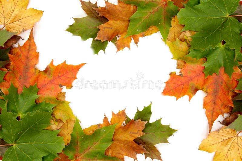 jesienni liście kolor zdjęcia royalty free