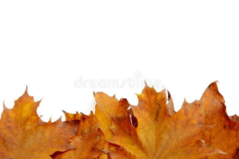 jesienni liście kolor fotografia stock