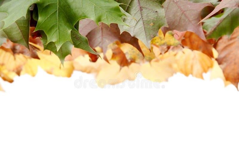 jesienni liście kolor obraz stock