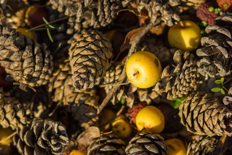 Jesienni tła z żółtym jabłkiem zdjęcia royalty free