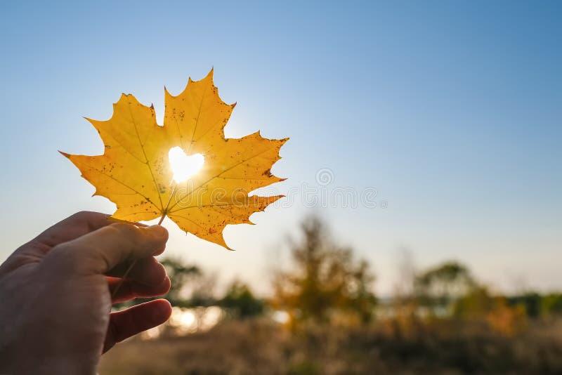 Jesienny żółty liść klonu z ściętym sercem w dłoni na niebieskim niebie zdjęcia stock