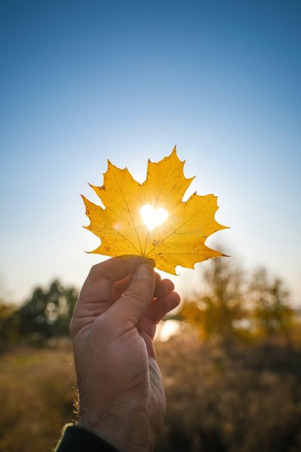Jesienny żółty liść klonu z ściętym sercem w dłoni przeciwko niebieskiemu niebu na zachodzie słońca, pionowy obraz stock