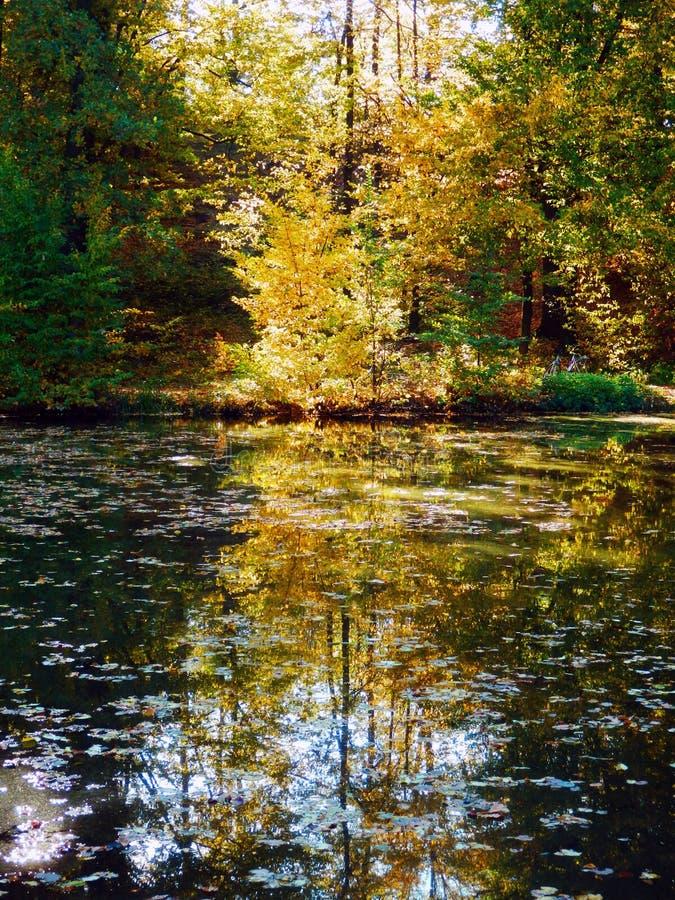 Jesienny bukowych drzew odbicie na wodzie obrazy stock
