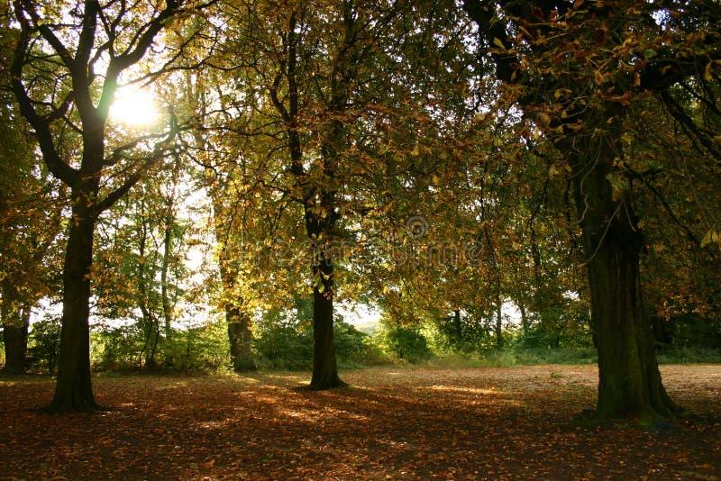 jesienny dzień zdjęcia royalty free