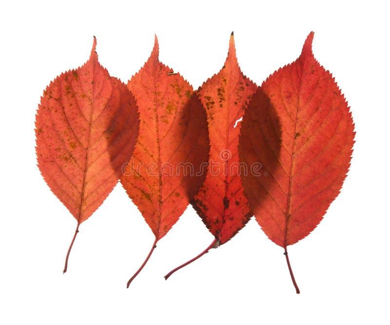 jesienny kolorowy target2170_0_ liść obraz royalty free