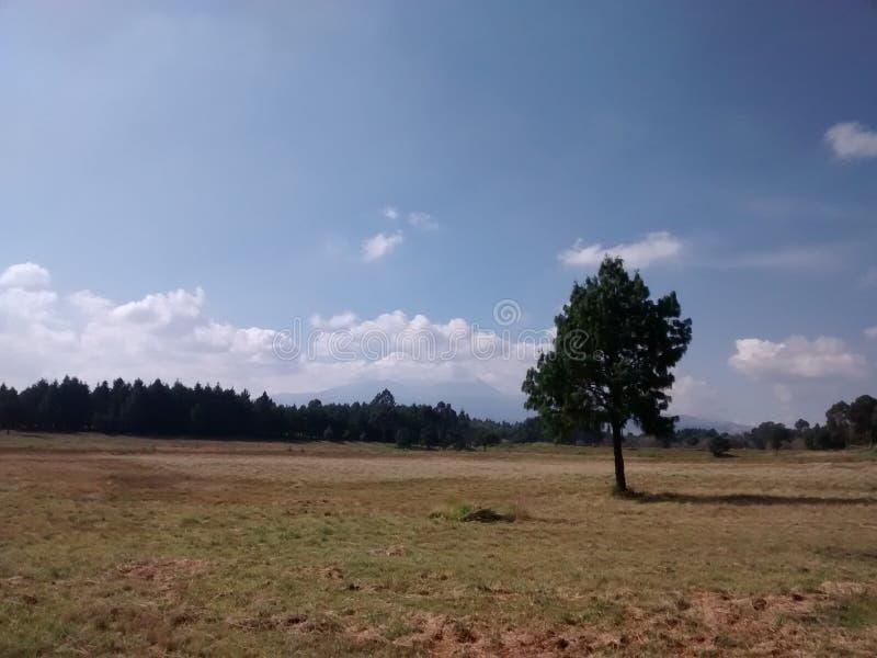 Jesienny krajobraz evergreens w tle fotografia stock