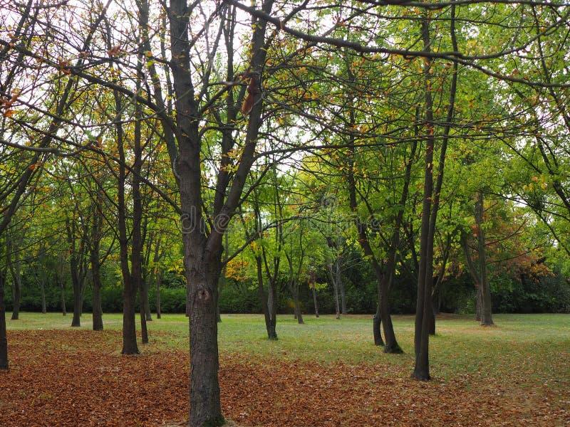 Jesienny krajobraz, wysuszeni liście w parku na chmurnym dniu zdjęcie stock