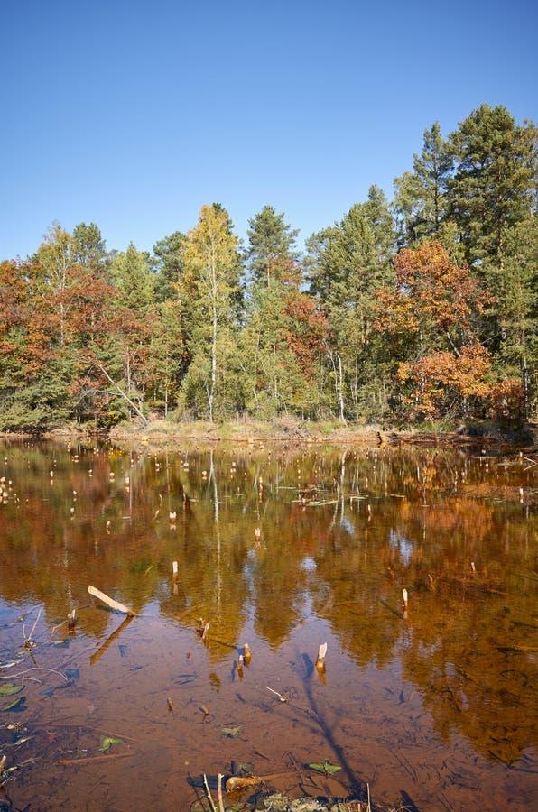 Jesienny krajobraz z stawem w lesie fotografia royalty free