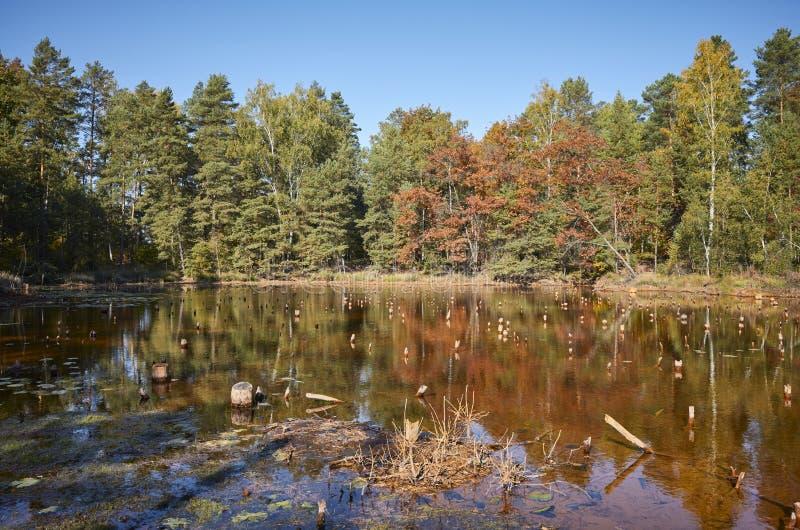 Jesienny krajobraz z stawem w lesie zdjęcie royalty free