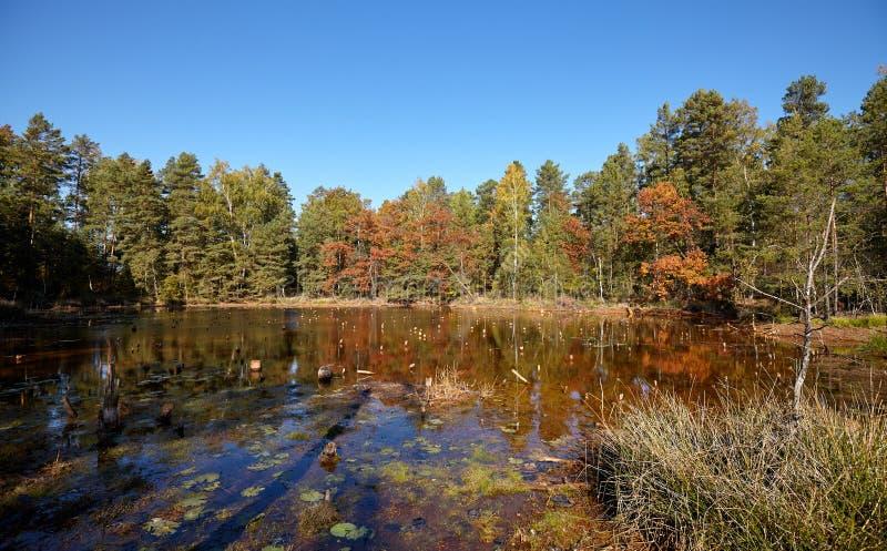 Jesienny krajobraz z stawem w lesie zdjęcie stock