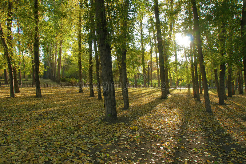 jesienny las obraz royalty free