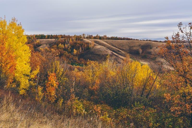 Jesienny las na zboczu fotografia stock