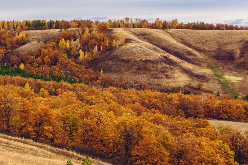 Jesienny las na zboczu obrazy royalty free