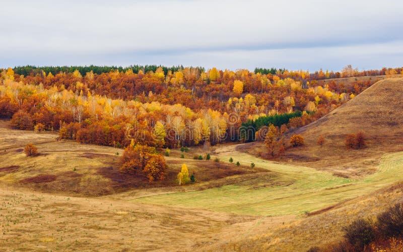 Jesienny las przy chmurz?cym dniem zdjęcia stock