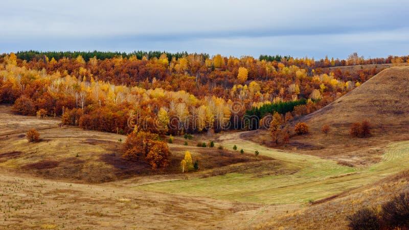 Jesienny las przy chmurz?cym dniem zdjęcie stock