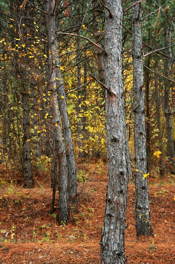 Jesienny lasowy zakończenie obraz stock
