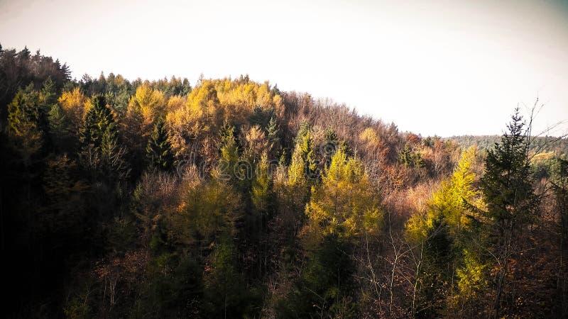 Jesienny lasu krajobraz obraz royalty free