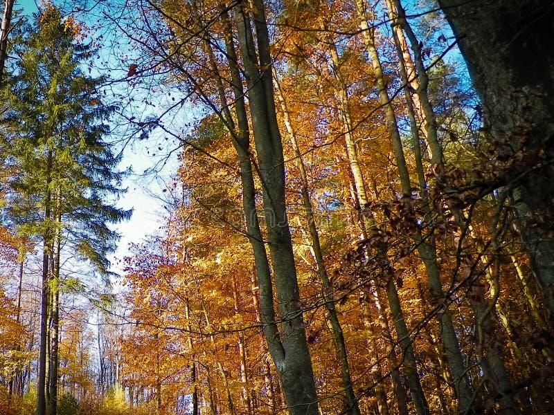 Jesienny lasu krajobraz zdjęcia royalty free