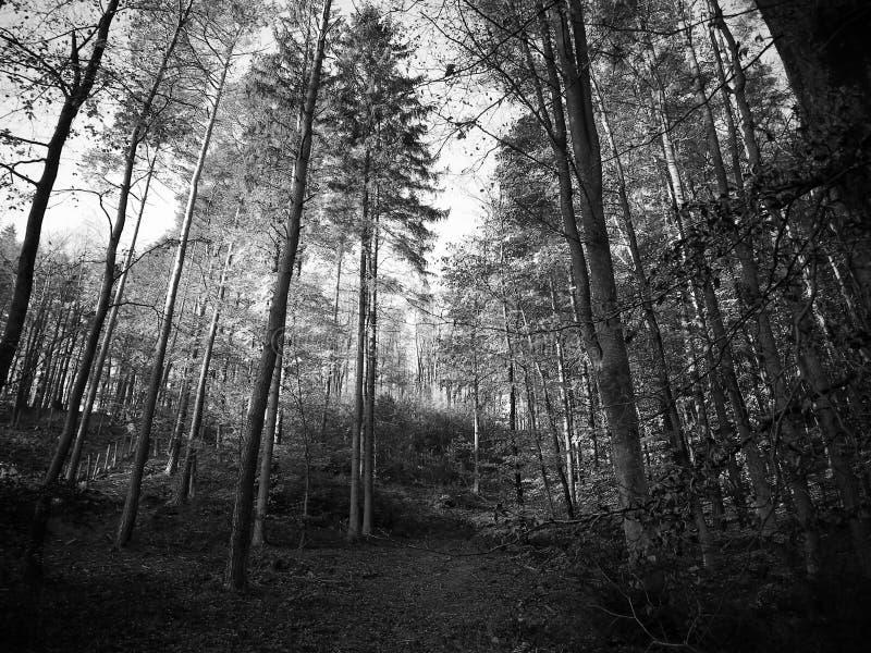 Jesienny lasu krajobraz obraz stock
